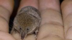 Che tesoro di mammiferi di ANDREA MONACOSpeciale Biodiversità