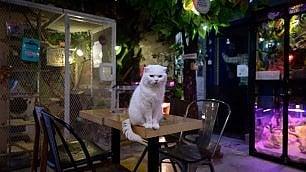 Seul, pet cafe aperti per forza