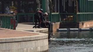 Cane cade in acqua: salvato dai carabinieri che multano la padrona