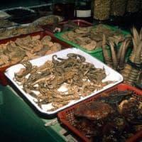 """Coronavirus, gli ambientalisti: """"E' ora di chiudere i mercati di fauna selvatica illegali"""""""
