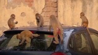 In India elefanti, scimmie e pavoni occupano le città deserte