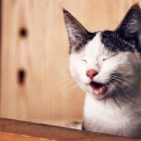 Coronavirus, vero o falso? Salvate i gatti e i furetti.Facili al contagio come le tigri?