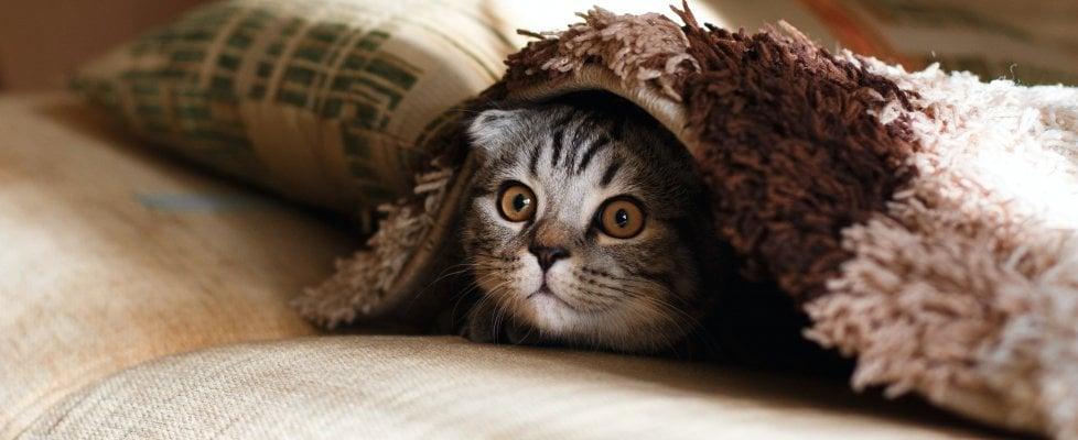 Ebbene sì: anche i gatti soffrono di solitudine