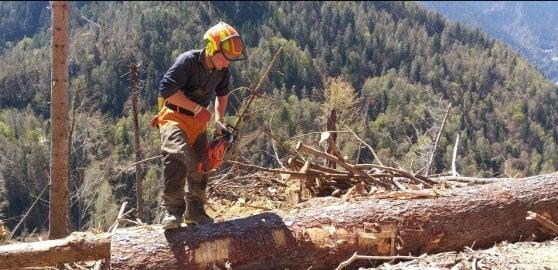Coronavirus, i boscaioli tornano a lavorare nelle valli spazzate dalla tempesta Vaia
