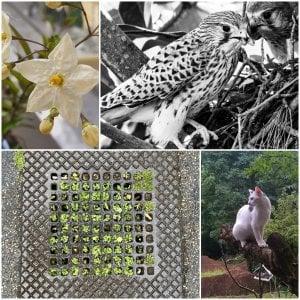Gheppi, coccinelle e fiori dal cemento: la natura che rinasce vista dai social