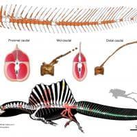 La vita acquatica dello spinosauro