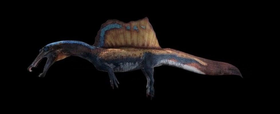 Spinosauro, il più grande dei dinosauri predatori era acquatico