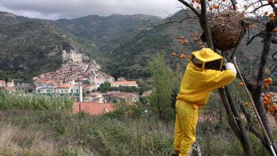 """L'invasione della vespa killer. """"Così le tecnologie possono aiutare a difendere le api"""""""