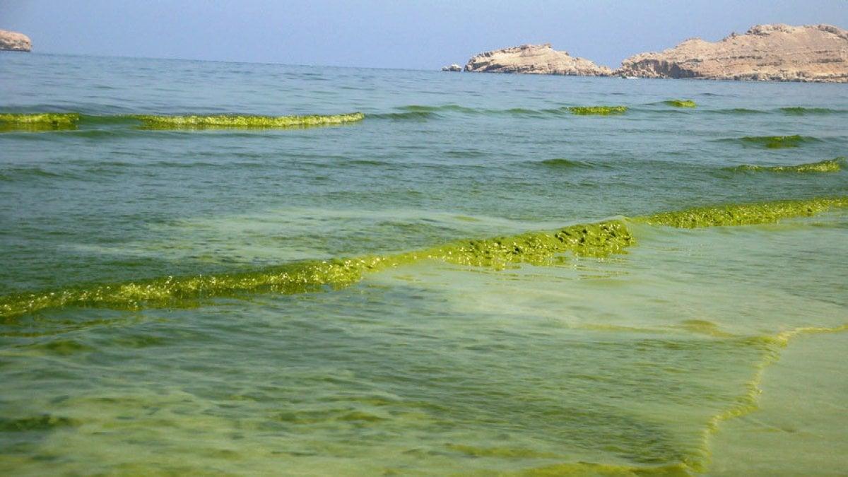 """L'invasione delle alghe tossiche vista dal satellite. """"Favorita dallo scioglimento dei ghiacciai"""""""