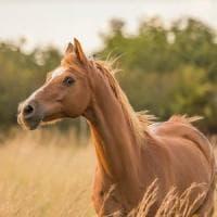 I cavalli sanno riconoscere i loro fantini, anche solo in fotografia