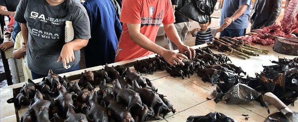 Coronavirus, nel mercato più famoso di Indonesia i pipistrelli sono ancora nel menu