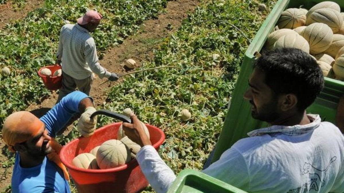 """Lavoratori immigrati, critiche al Governo: """"Ci sarebbe voluto più coraggio"""": le norme lasciano fuori molti migranti"""