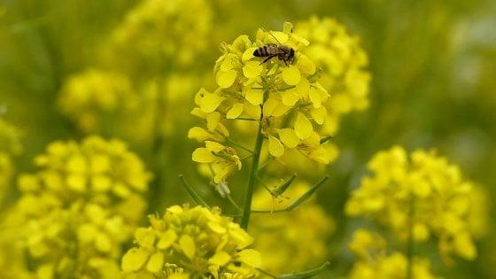 Settimana della Natura: dalle api ai parchi, per rilanciare biodiversità e turismo di prossimità