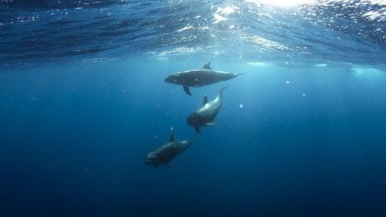 Giornata della biodiversità, cetacei a rischio: ogni anno 180 delfini trovati morti sulle coste italiane