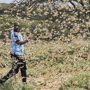 """Croce Rossa, Africa orientale: l'allarme per una """"tripla minaccia"""" di inondazioni, COVID-19 e locuste"""