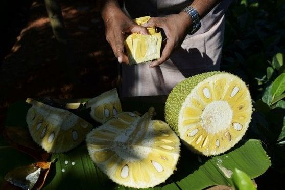 La rivincita del jackfruit: boom del frutto che sa di carne