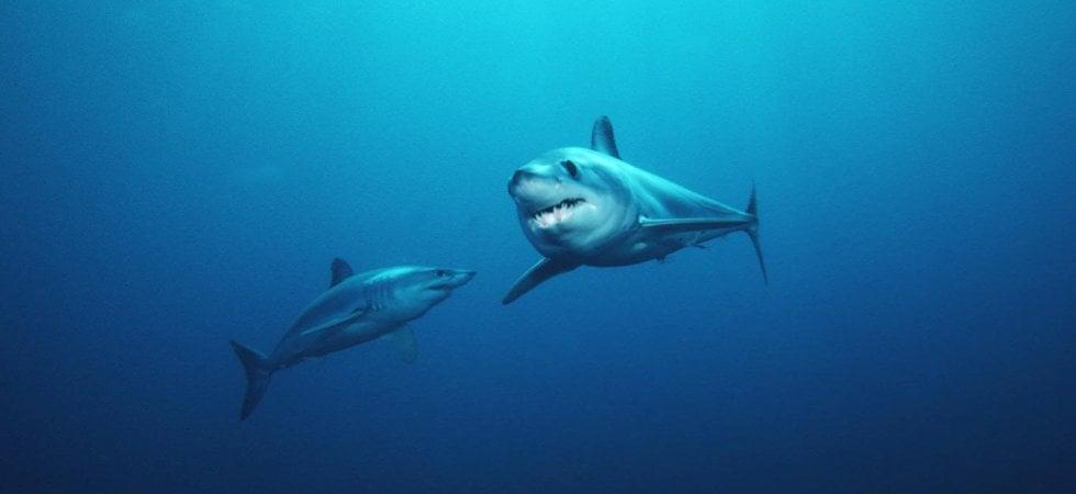 Tornano gli squali. Ma è la loro scomparsa a fare paura