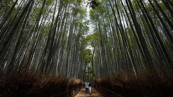 "Giappone precisa: ""Niente bonus per i turisti internazionali"""