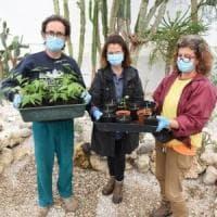 A Perugia germogliano i semi sopravvissuti alla bomba atomica