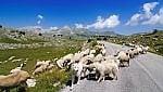 Dal Sentiero Italia quello dei Parchi: i 26 parchi nazionali in un solo cammino