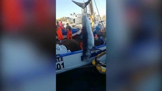 Allarme Wwf: squalo a rischio nel Mediterraneo con la pesca illegale