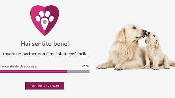 Doggami, già 600 inscritti per il Tinder dei cani
