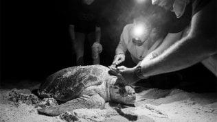 Quanti ospiti sulle tartarughe di VINCENZO FOTI