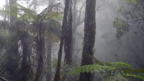 Clima, nel mondo c'è sempre meno nebbia. Un satellite misura il danno alle piante