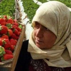 Caporalato, l'acquisto di un pullman per il trasporto delle braccianti che raccolgono frutta nel Sud Italia