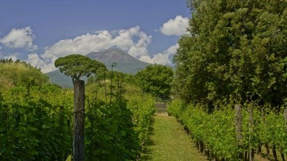 Viaggio alla scoperta dei sapori del Vesuvio, tra piennolo e albicocche