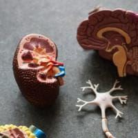 I neuroni che pescano i ricordi e ci aiutano a decidere