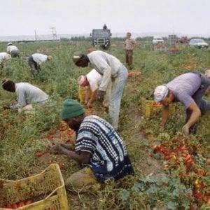 Caporalato e sfruttamento, la rete giovane di Slow Food Italia lancia una Campagna per informare i consumatori