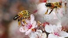 Adotta un alveare: salverai le api e gusterai il loro miele direttamente a casa