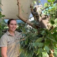 Allarme degli scienziati in Australia: i koala potrebbero scomparire entro il 2050