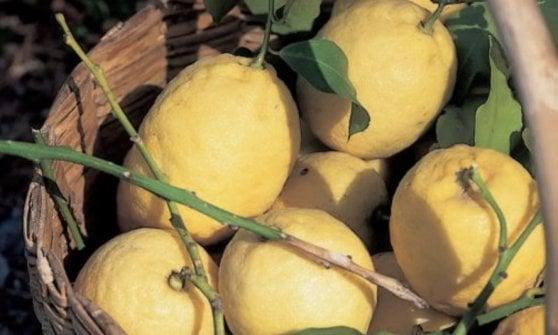 Colatura, fichi e limoni: viaggio nei sapori da salvare di Sicilia, Puglia e Calabria