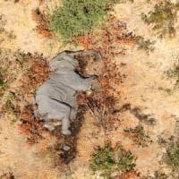 """Il mistero degli elefanti morti in Botswana. L'esperto: """"Cianuro, bracconieri o nuova..."""