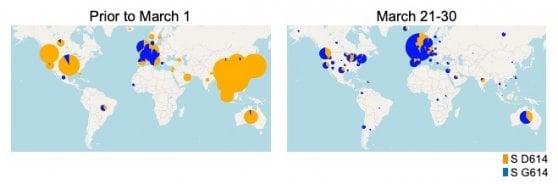 Il Coronavirus è mutato: ne circola una versione  più contagiosa