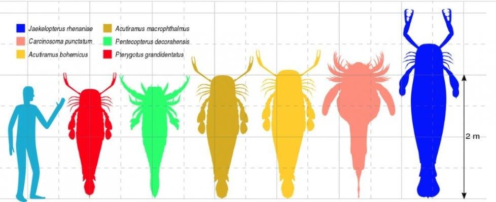 Il più grande predatore marino del paleozoico? Lo scorpione di mare