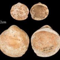 Quelle conchiglie appese un filo che raccontano la storia dei nostri antenati