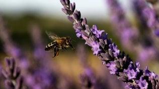 Quanto ci servono gli insettiLo speciale In collaborazione con Fondation Segré