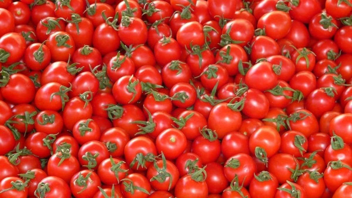 """Se il pomodoro viaggia sulla blockchain. La """"catena dei blocchi"""" per blindare il made in Italy"""