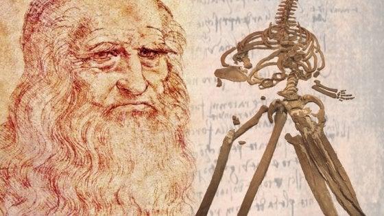 La balena di Leonardo da Vinci era un fossile vero, non un mostro di  fantasia - la Repubblica