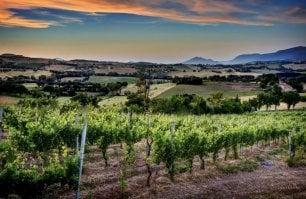 """Il New York Times celebra il Verdicchio: """"Il più grande vino bianco italiano"""""""