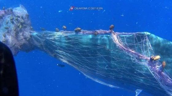 """Fermate le spadare"". Così i muri di reti tornano a uccidere nei nostri mari"