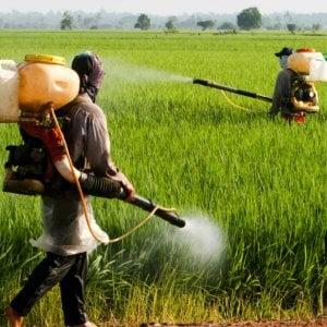 """Brasile, pesticidi: le multinazionali europee ne vendono tonnellate """"altamente pericolosi"""" vietati nei loro Paesi"""