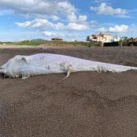 Mediterraneo: balene minacciate da reti, plastica e virus