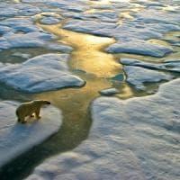 L'estate bollente del Nord, dalle Svalbard al Canada. Preoccupa l'Artico