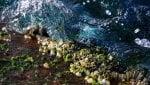 Cozze a rischio con i mari più acidi