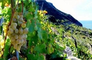 I grandi vini d'Italia: la Biancolella
