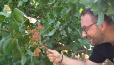 """""""Adotta un pistacchio"""": la dolce iniziativa di due pasticcieri siciliani"""